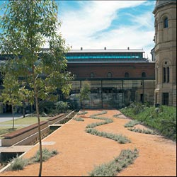 The new wetland garden in the museum's forecourt. Image: Grant Hancock